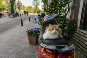 cats in Amsterdam