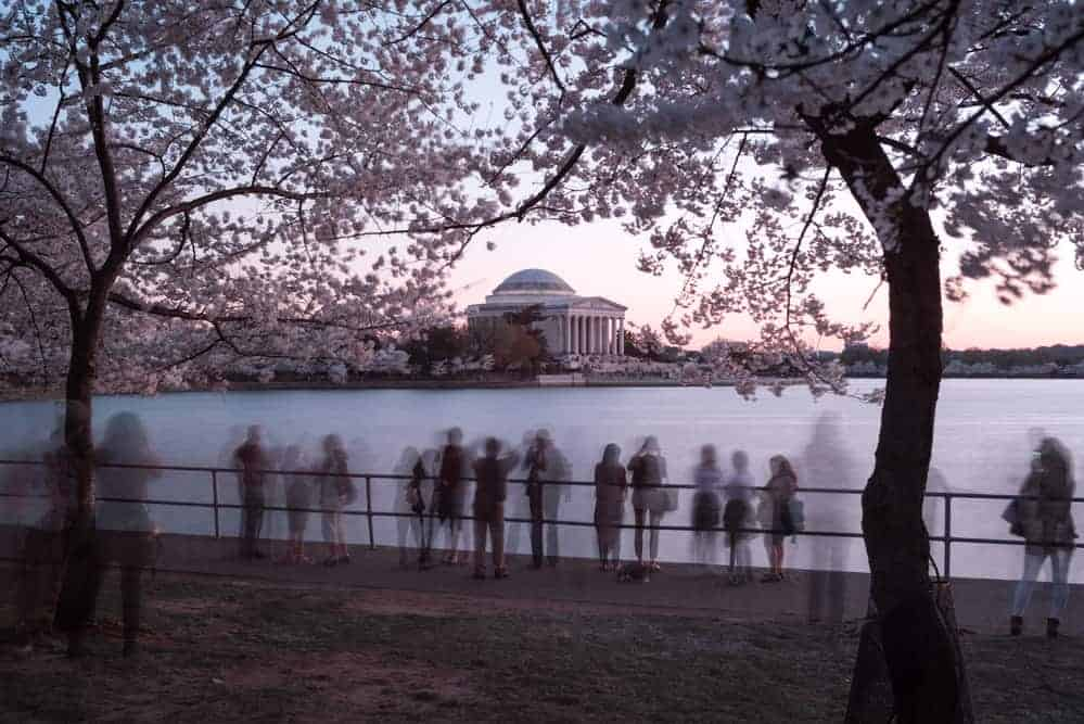 Cherry blossom festival in washington D.C.