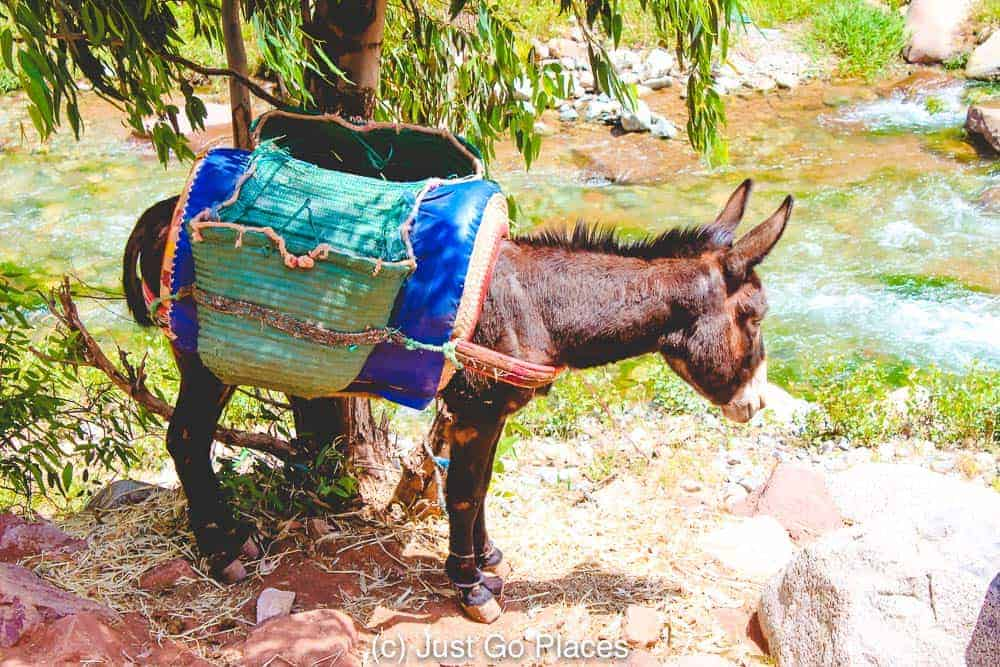 A colorful beast of burden by the Ourika River Atlas Mountains