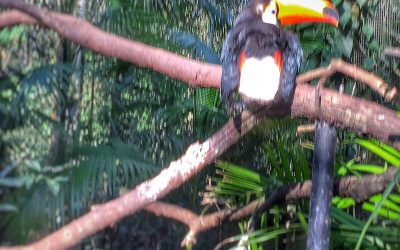 The Truth About Toucans
