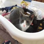 Someone likes freshlyoutofthedryer laundry cats catsofinstagram cutefest cute