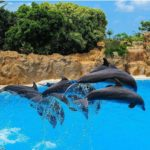 Synchronised dolphin jumping at Loro Parque in Tenerife  completelyhellip