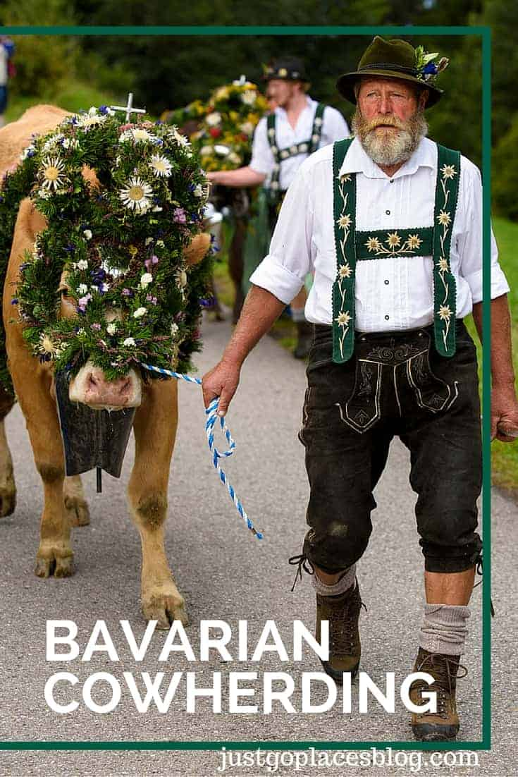 Bavarian Cowherding