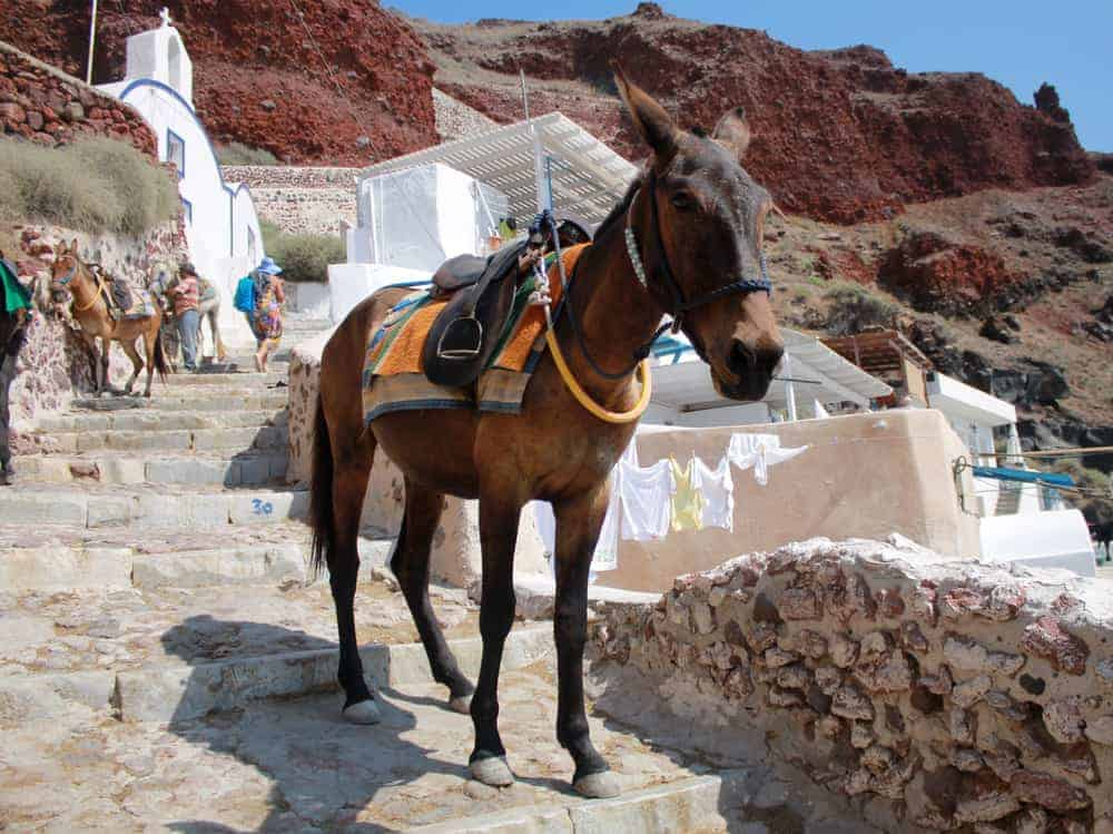donkey in Oia in Greece