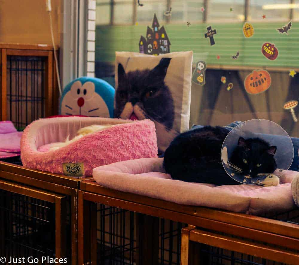cat cafe with kids