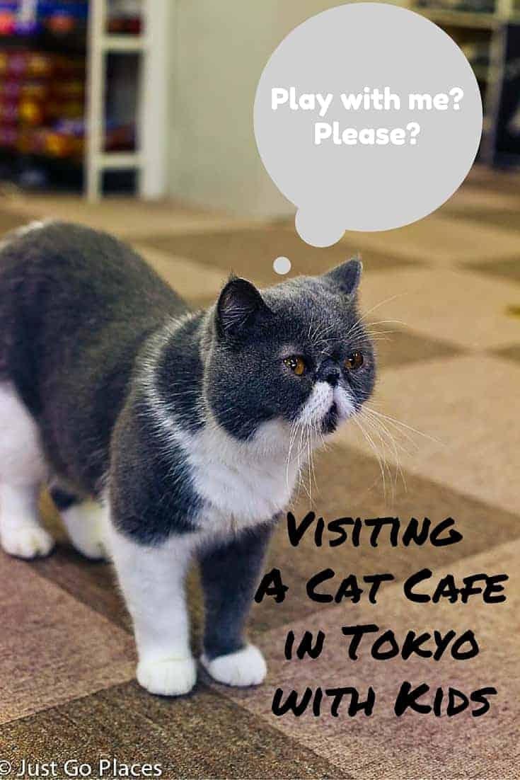 visiting a cat cafe in Tokyo with kids
