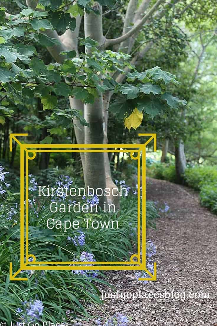 Kirstenbosch Garden in Cape Town is a must-see destination for visitors