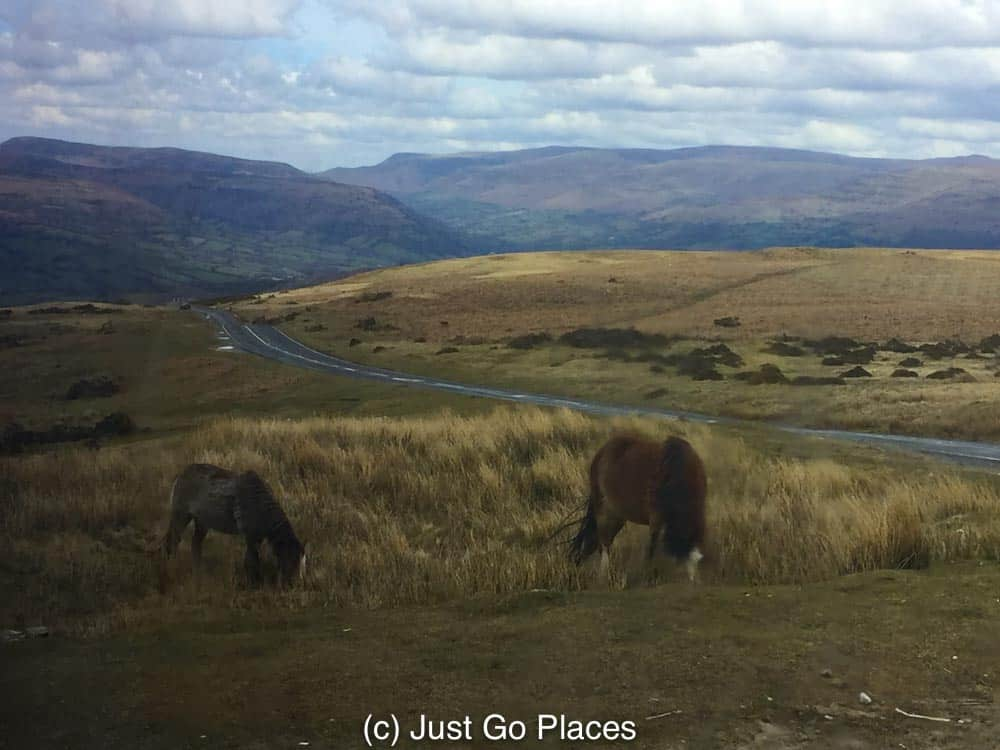 wild ponies grazing on moorland in the Brecon Beacons
