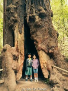 Visiting the California Redwoods at Muir Woods with kids