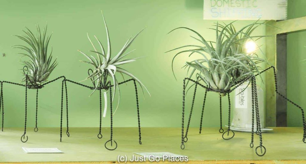 Air plant sculptures done by local artist, Sam Guzman. Loved it so much, I bought one.