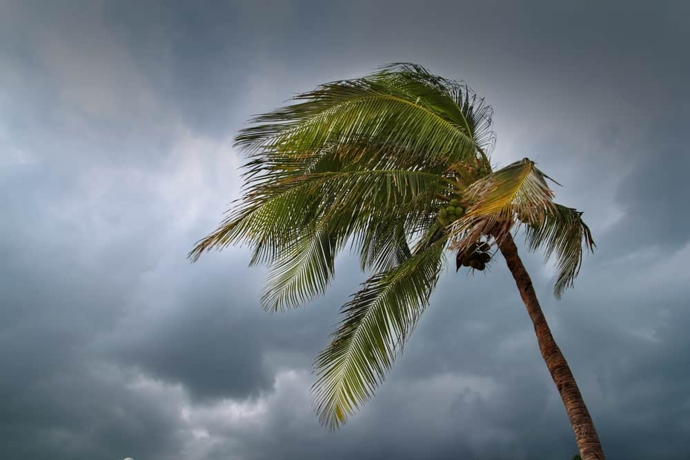 when location independent lifestyle means cyclones in the south pacific