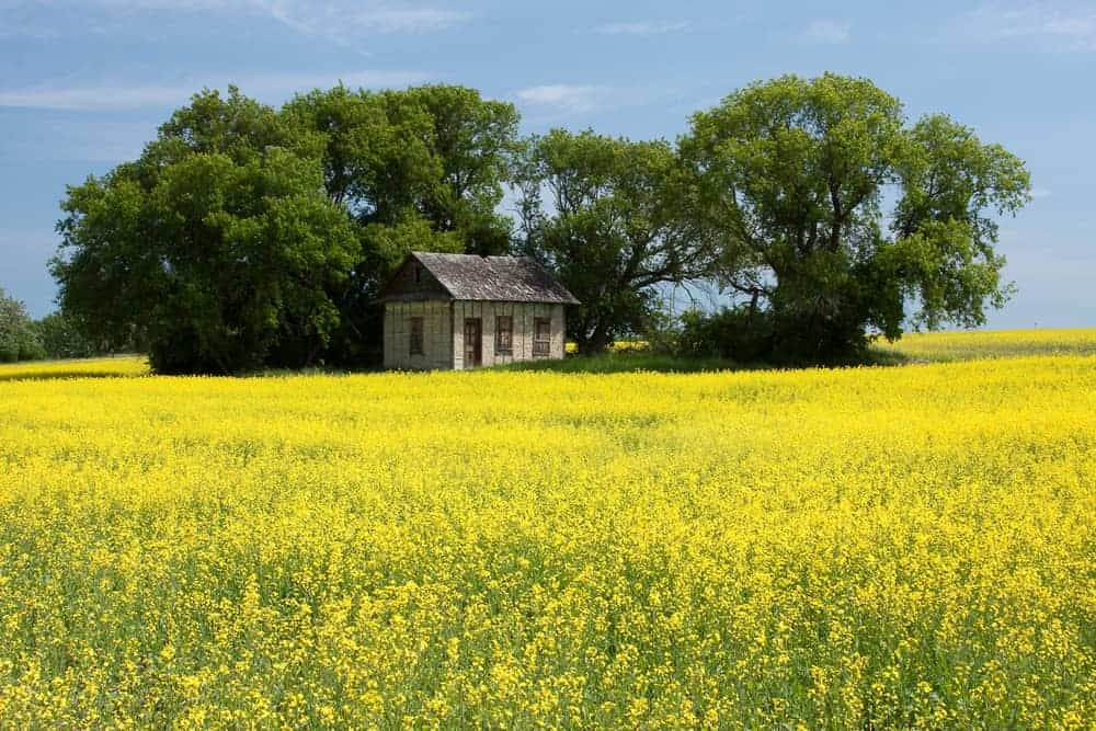 Podcast Show Notes: Road Trips Retracing The Laura Ingalls Wilder Books