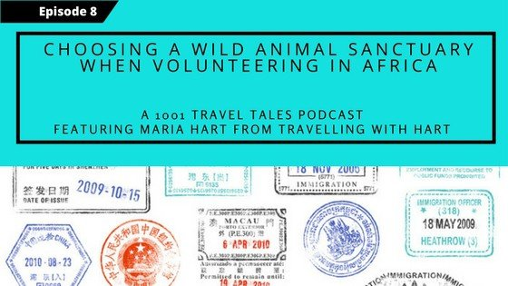How to choose a wild animal sanctuary when volunteering in Africa