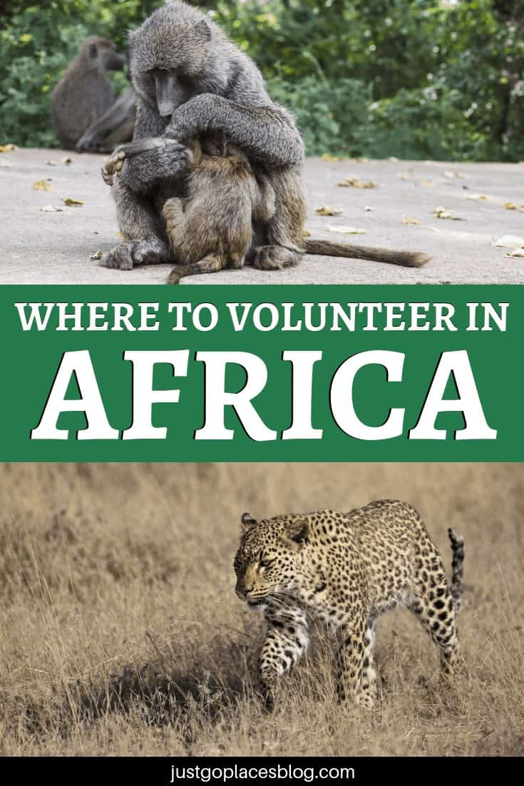 How to choose a wildlife animal sanctuary when you decide to go volunteering in Africa? Check out this post where Maria tells us of her experience volunteering at N/a'ankuse, a wildlife rescue centre in Namibia. Plus, find out what to look for when you have to decide where to go. Responsible volunteering in Africa is important! #africa #volunteer #volunteering #volunteeringprogram #wildlife #namibia