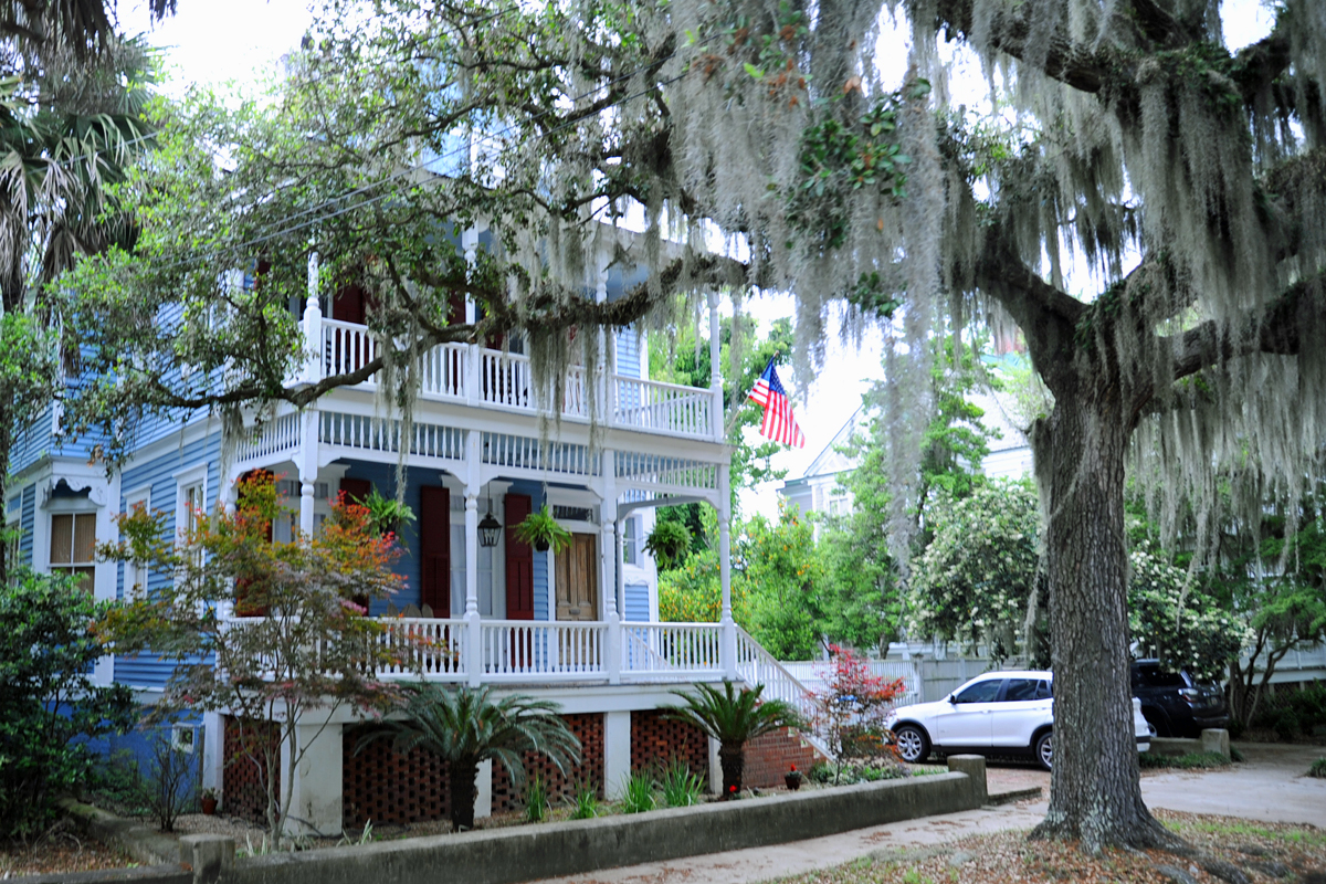 Spanish moss covered tree and a white pillared Southern Mansion