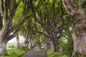Discovering the delights of the Antrim Coast's Causeway Coastal Route on a Northern Ireland Roadtrip along with a weekend in Belfast