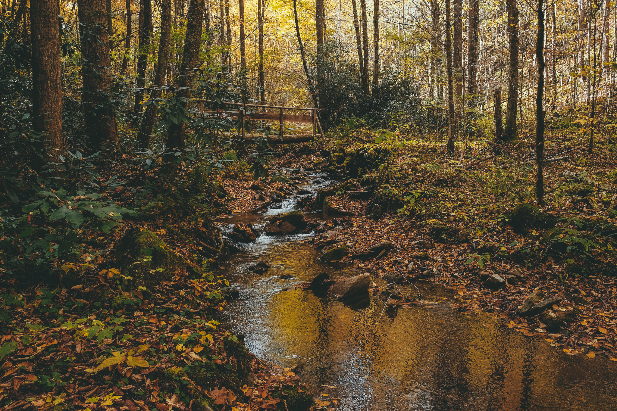 trees and stream in Rocky Fork State Park in Tennessee