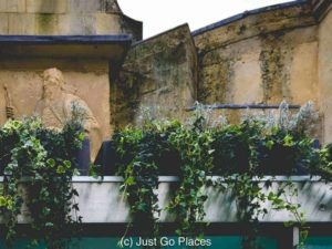 Prince Bialud sneaks a peek from behind the ivy