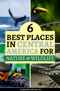 Are you looking for a winter sunshine break that has more than just lazing on a beach? Discover where to go in Central America and the Caribbean for nature travel and wildlife travel. From spotting whales in the Dominican Republic through trekking through lush landscapes in Belize, these 6 nature destinations will make you want to pack now! #naturetravel #wildlife #ecoutourism #centralamerica #caribbean