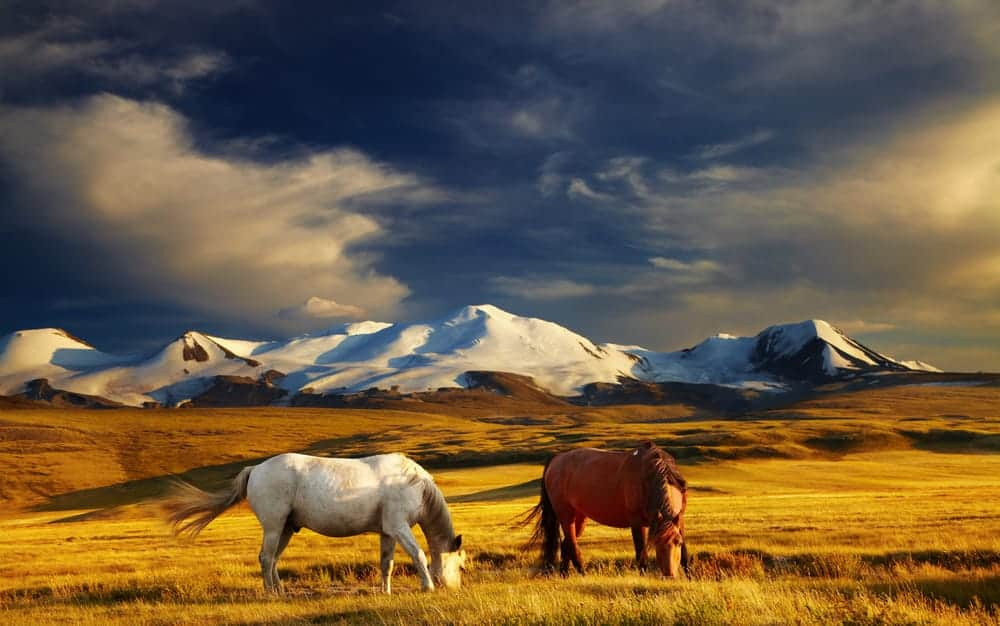 Your trip around the world itinerary can include Mongolia with an Abercrombie and Kent private jet tour