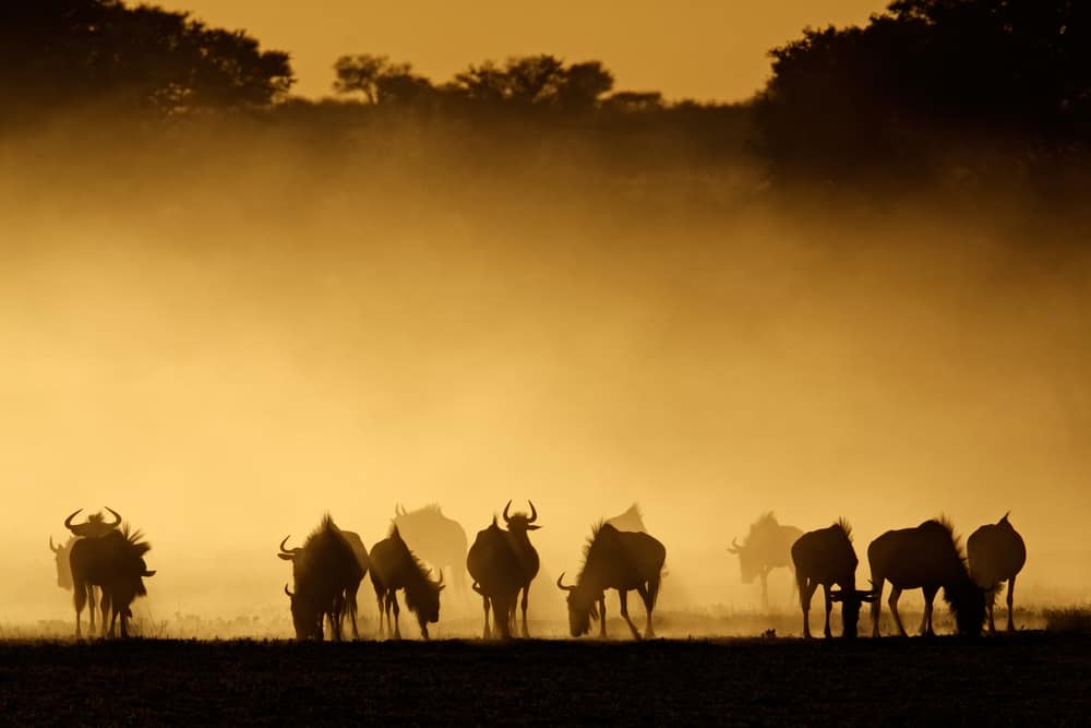 Whole world tour packages often include a pitstop for an African safari.