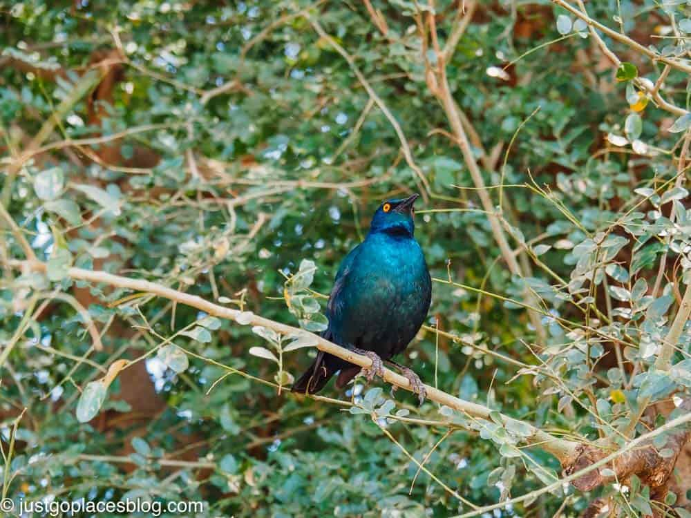 bird in South Africa