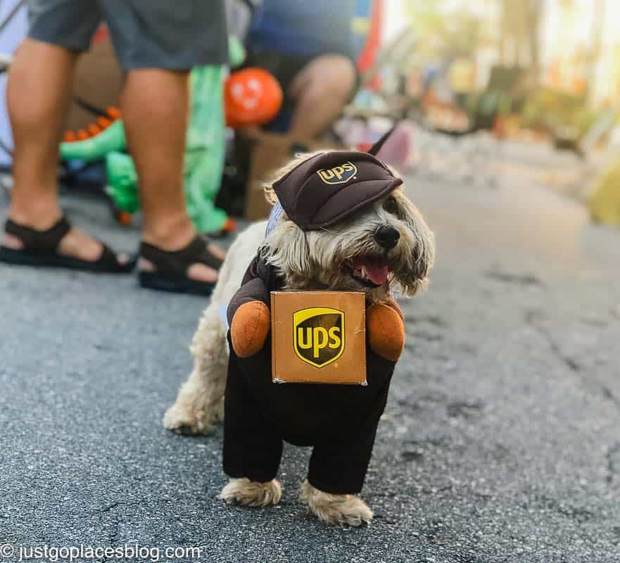 dog dressed up for Halloween as a UPS driver