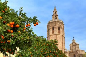 Trees with ripe oranges and bell tower of famous Saint Mary's Cathedral on background under blue sky in Valencia, Spain.