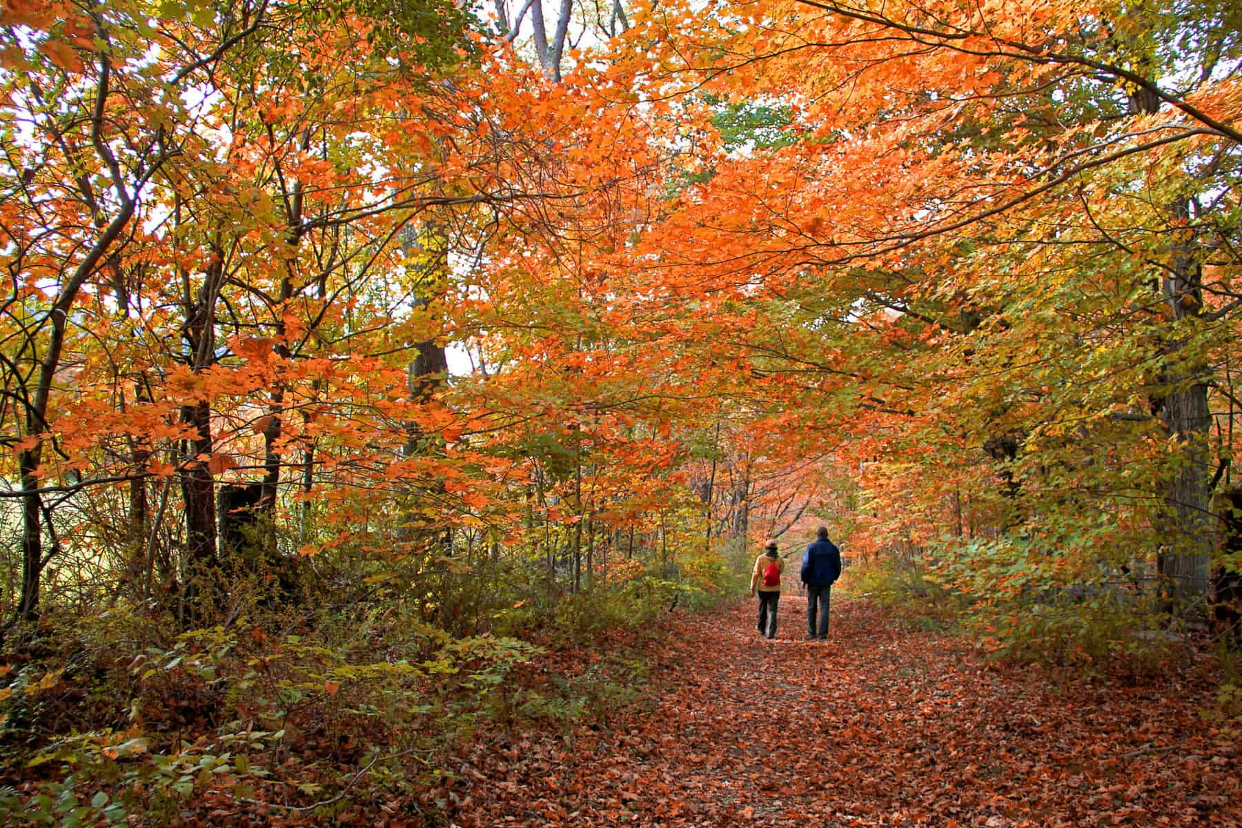 Adult and child strolling through the Berkshires forest in Autumn