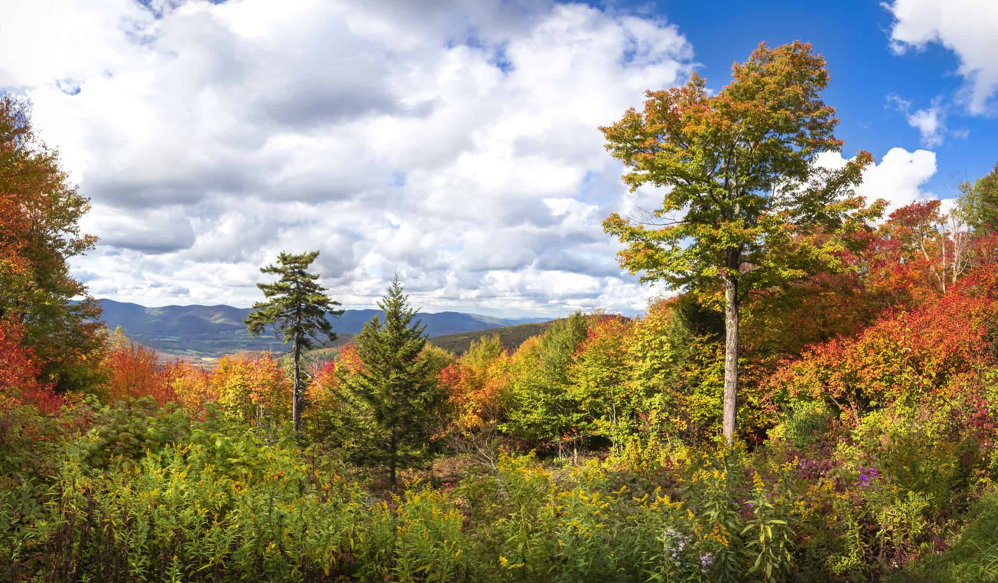 Beautiful fall foliage view from Mt Greylock, New England